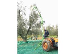 Asquini Tordo MO950/A Nuovo